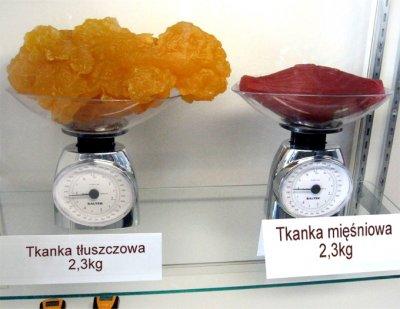 waga tluszczu waga miesnie cennik sterydow clenbuterol cena